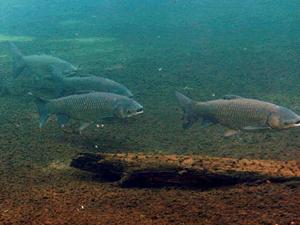 rybolov.in.ua