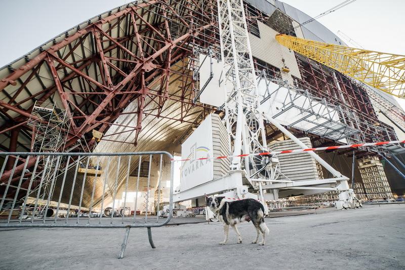 Яке ж будівництво без собаки?