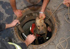 """Результат пошуку зображень за запитом """"витягнули собаку із каналізації"""""""