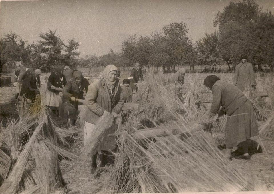 Жінки мнуть коноплі. с. Тарасівка, 1950-ті роки.