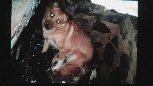 Діггер у пастці вигрябної ями, де він прожив два роки. Фото з фейсбуку Ірини Васюри